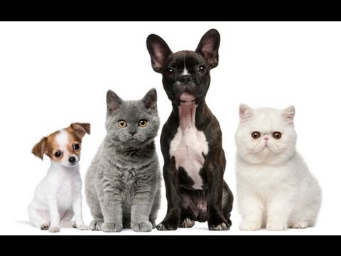 Funny Jerks Animals Better Than Pranks Funny Dogs and Cats V