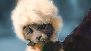 Sombrero para Gato