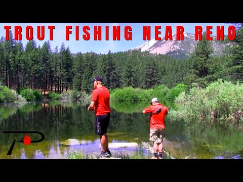 Trout Fishing Near Reno