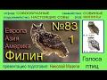 Филин Европа Азия Америка Голоса птиц mp3