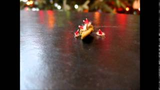 Silkworms In Santa Hats