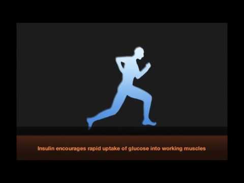 Сахарный диабет 1 типа и физическая нагрузка