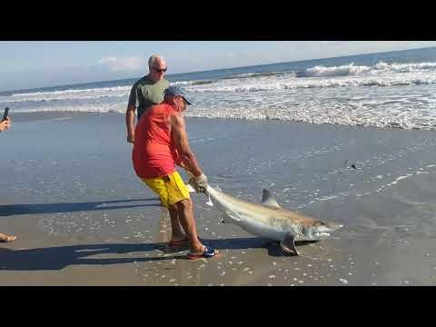 12-2-17 Cocoa Beach FL shark caught at shore