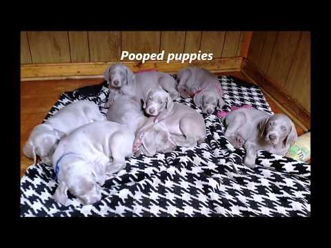 Euro x Summit3 Puppy Cam4