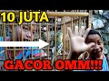 Review Burung Decu Gacor Milik Bocil Seharga  Juta  Mp3 - Mp4 Download
