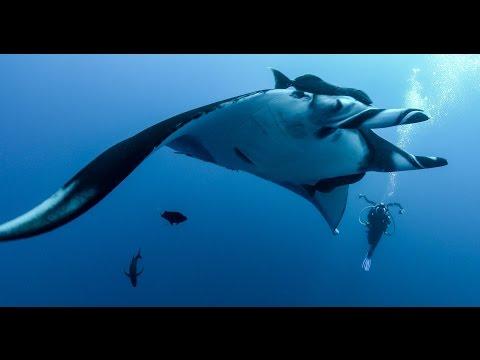 4K Underwater Video: Revillagigedo Archipelago (Socorro Islands) Scuba Diving