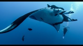 4K Underwater Video: Revillagigedo Archipelago (Socorro Islands) Scuba Diving thumbnail