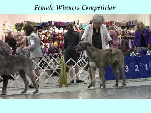 11-11-2017 Ozarks Kennel Club - Springfield MO - Irish Wolfhounds