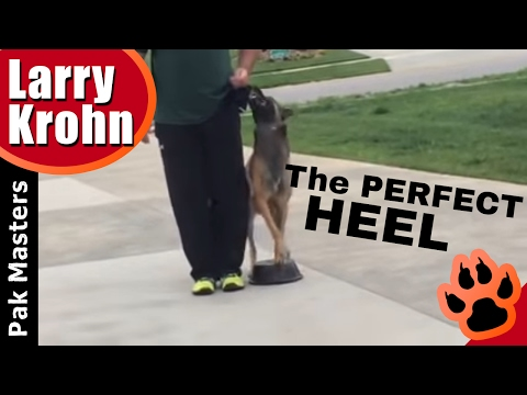 Fixing problems with competition heeling/Pak Masters Dog Training