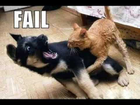Epic funny animal fails