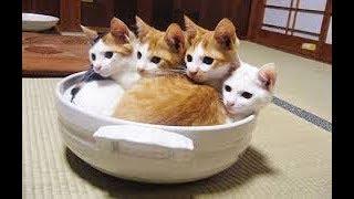 おもしろい、でもなぜかカワイイww そんな猫ちゃん動物まとめです♪ 面白...