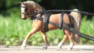 Moja stajnia koni Schleich - Stajnia_High_Waist