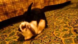 Секс кроликов.MOV