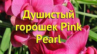 Душистый горошек душистый Пинк Перл. Краткий обзор, описание lathyrus odoratus Pink Pearl