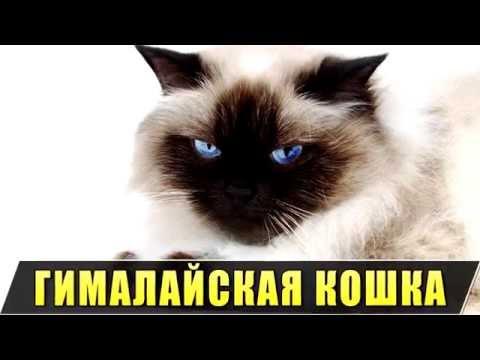 уход игры котики