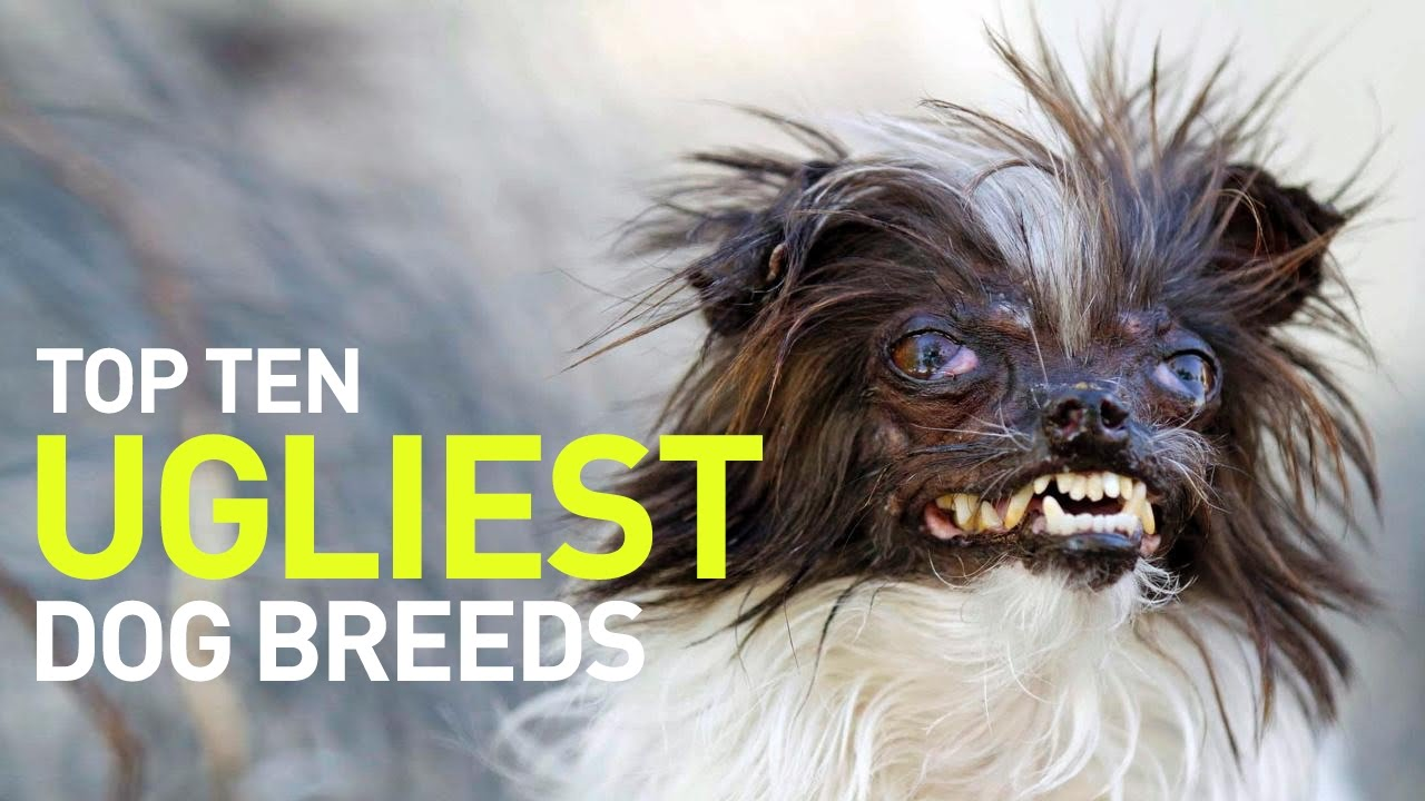 Top 10 Ugliest Dogs and Dog Breeds in the World - YouTube