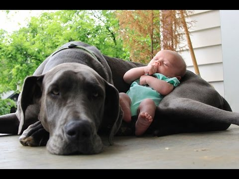Ultimate funny & cute dogs and kids compilation - Mix of the best clips - Must watch!