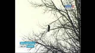 В Вельском районе 77-летняя женщина убила своего мужа