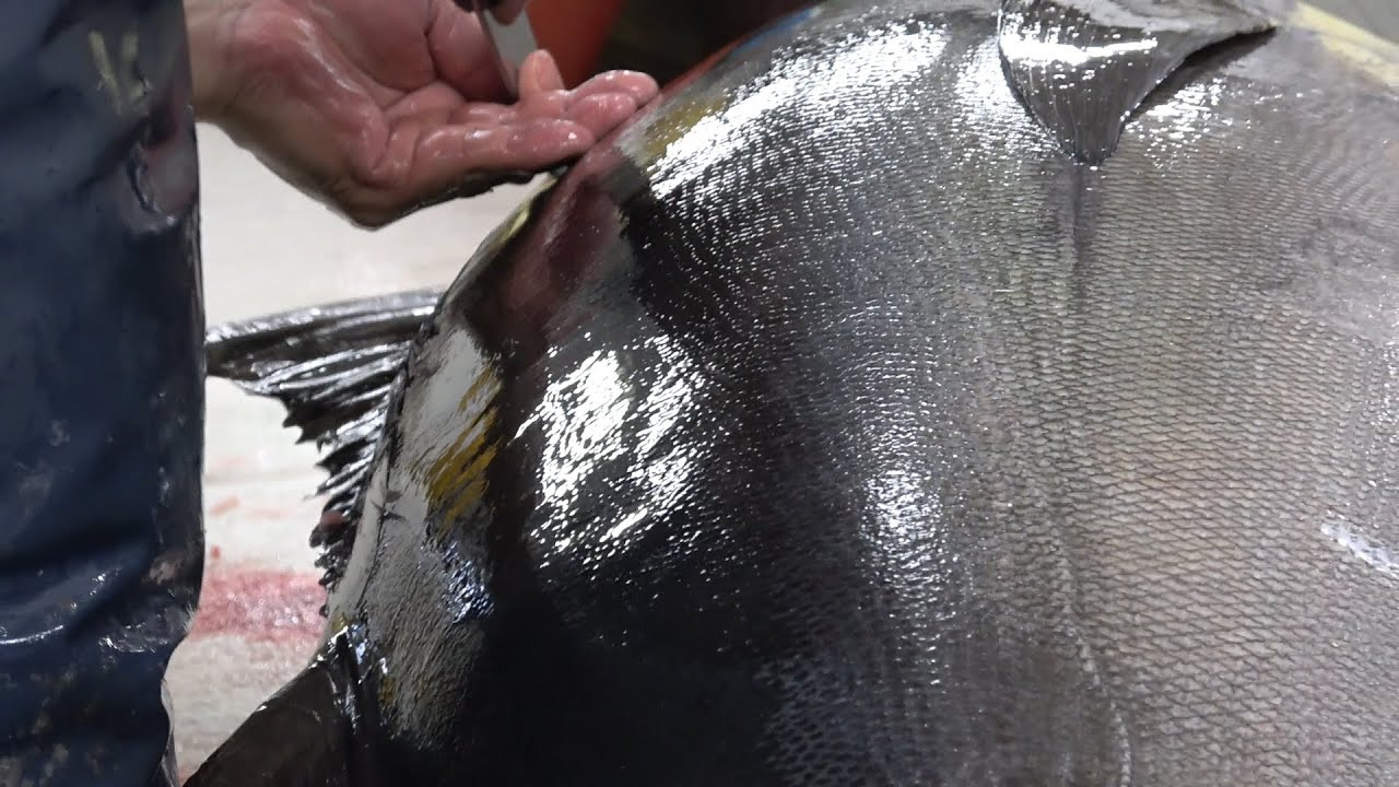 Japanese seafood | Beautiful Professional Clean techniques | 70kg over Bigeye Tuna SASHIMI | okinawa