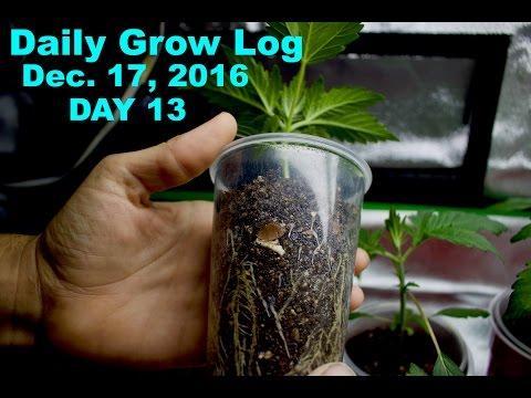 Daily Cannabis Grow Log - Dec 17