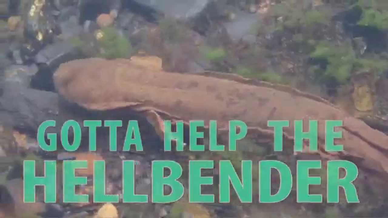 Help the Hellbender