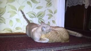 ✅Cat Tim vs  Cat Сache / Карате по кошачье / funny cats / 猫