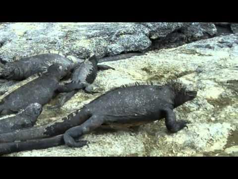 Galapagos Adventure