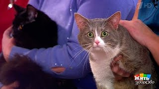Как развеселить кота. Жить здорово! (18.04.2017)