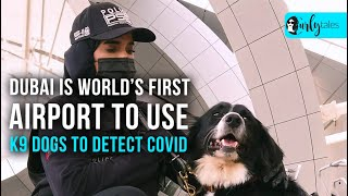 World's First Airport To Use K9 Dogs To Detect Covid | Curly Tales