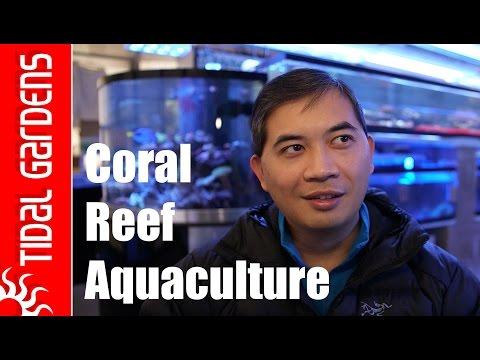Coral Reef Aquaculture