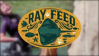 uShaka Ray Feed - Sea Animal Encounters Island