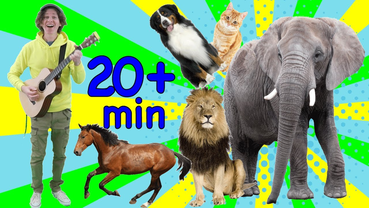 Study English Online for Kids   Animal Songs for Learning   Learn with Matt