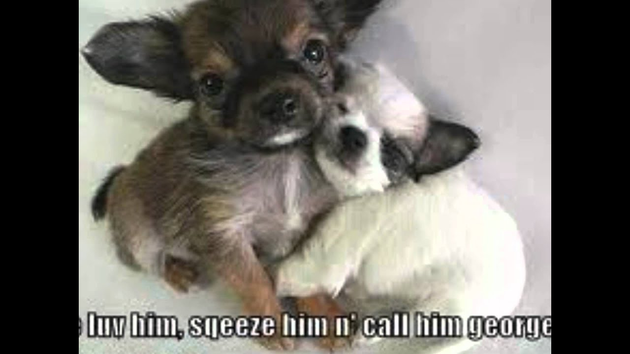 cute animals things funny saying really plz