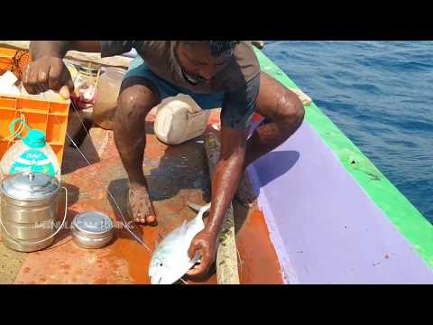 HANDLINE FISHING //TREVALLY FISHES CATCHING BACK TO BACK