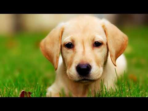 Вопрос: Как лечить глисты у собак?