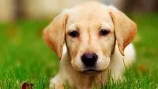 Как вывести глистов у щенка в домашних условиях?