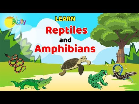 Reptiles Names For Kids In English | Learn Reptiles And Amphibians For Children || Amphibians Names