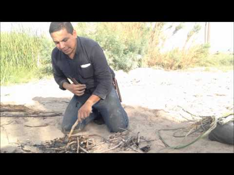 Desert Survival Food: Cattails (Typha latifolia)
