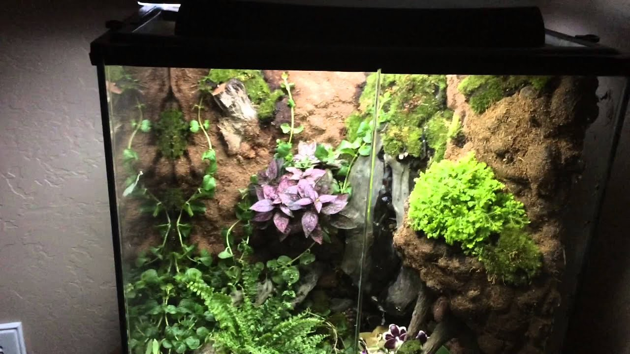 Living Vivarium. Exo Terra   YouTube