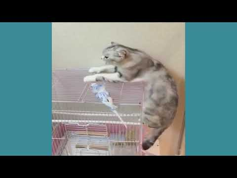 funny video cats and dogs compilation 2017