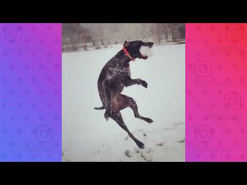 Cute and Funny Snow Dog Compilation | February 2019 | Dog and Puppy Videos of Instagram