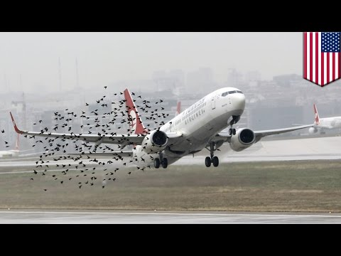 Bird strike problem: Sonic nets could prevent bird strikes at airports, says new study - TomoNews