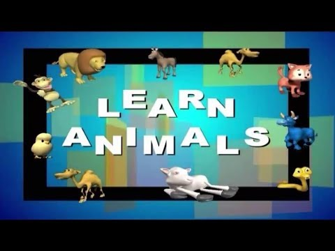 Learn About The Animal Kingdom - Animals And Their Categories (Basic Activity For Children)