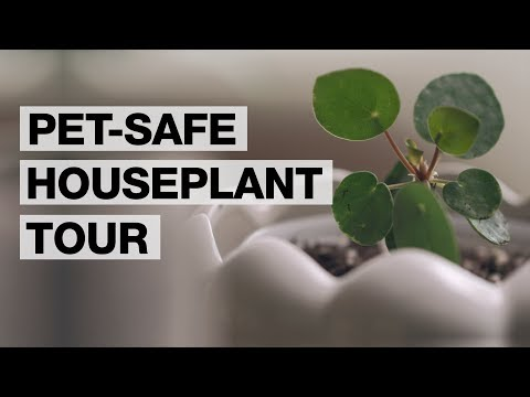 Pet Friendly Plants For Your Home