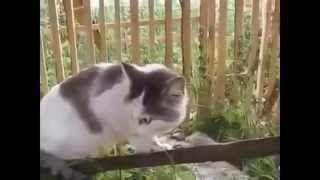 Животные говорящие Pets speaking