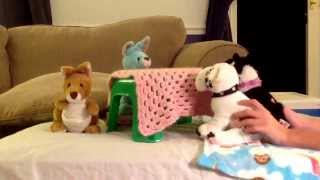 Fantastic Webkinz Hotel Episode 1 Part 1