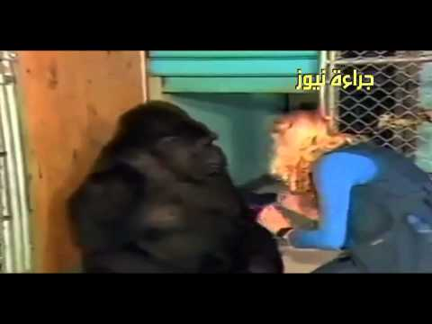 Gorilla express her grief at the death of the cat was living with her