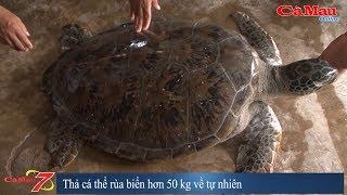 Cà Mau: Thả cá thể rùa biển hơn 40 kg về tự nhiên