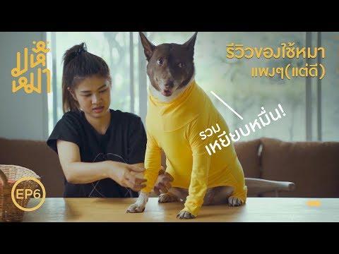 (EN) รีวิว ! ของใช้หมา แพงแต่ดีย์ !  มหึหมา EP6