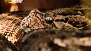 وثائقي _ أفتك حيوانات العالم_ أفريقيا HD